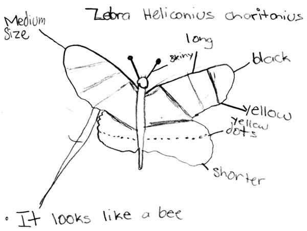 A nicely labeled butterfly drawing by an AMS student